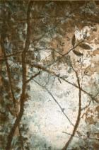 Treetop II